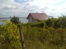mezi-vinohrady