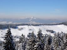 zimn-bedichov