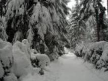 zimn-krajina
