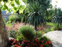 palmy-v-zahrad