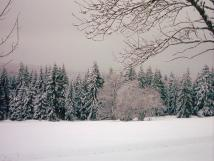 zimn-krajina-opolenec