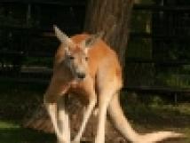 zoo-hodonn-3