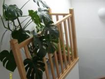 -chodba-a-schody