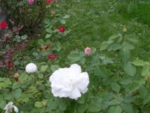 re-okrasn-zahrada