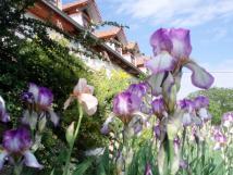 jarn-zahrada-u-terasy