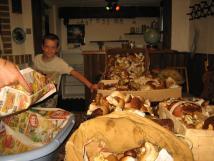 houby-z-brd-ndhera