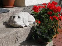 kamenn-pes