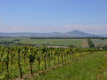 nae-vinohrady