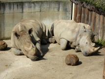 zoo-zln-len-nosoroci